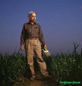 Ferdynans.com, ferdynansdotcom, ferdynans dotcom, Einstein, Albert Einstein, gambar Einstein, Photoshop Einstein